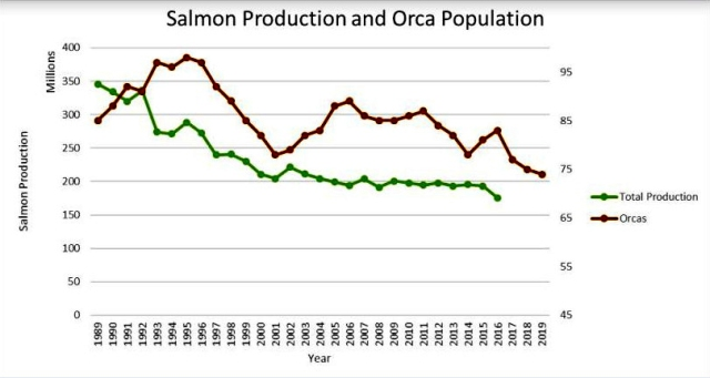 Orca and salmon decline graph